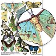 Butterflies & Moths Collage Sheet