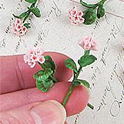 Miniature Pink Geraniums