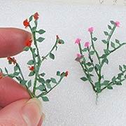 Miniature Rose Vines